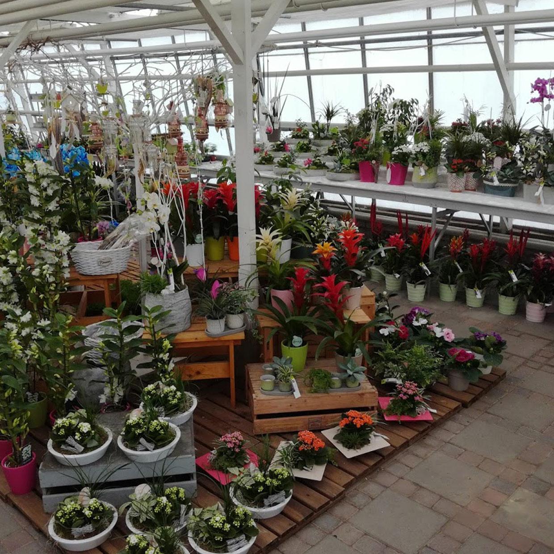 espace-plantes-4