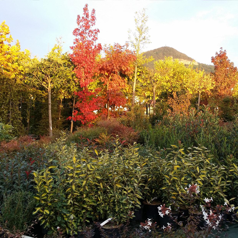 jardin-de-chartreuse-1