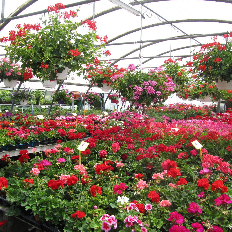 jardin-de-chartreuse-2