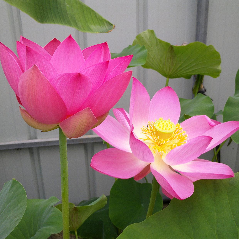 jardinerie-argeles-photo-1