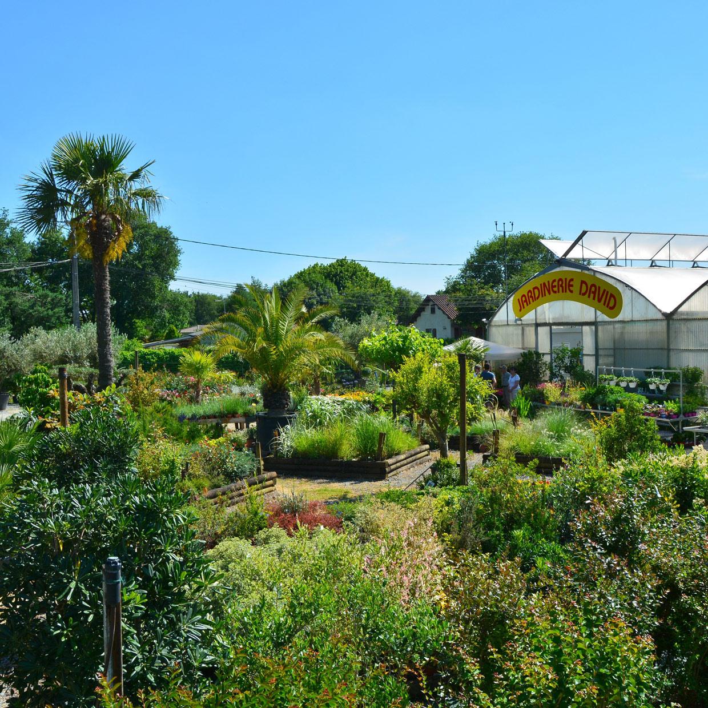 jardinerie-david-4