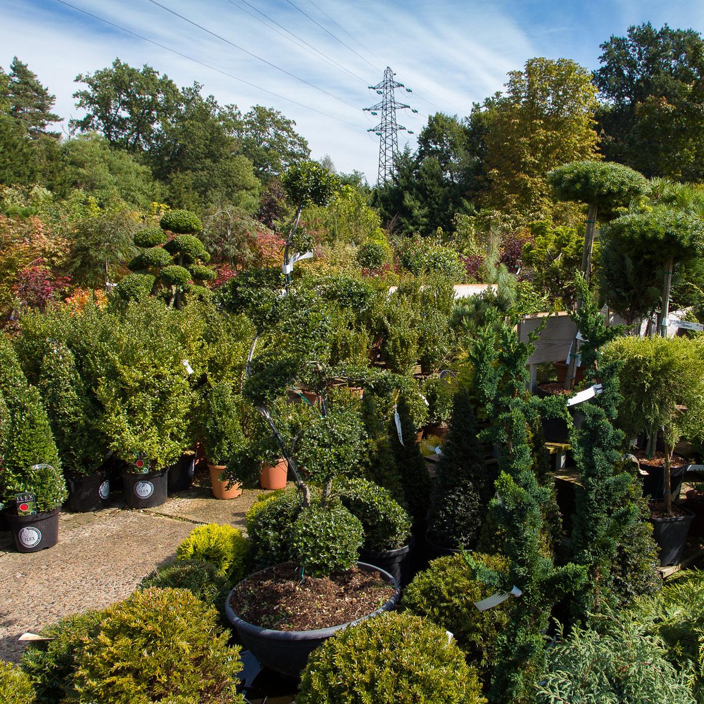 jardinerie-gunther-4