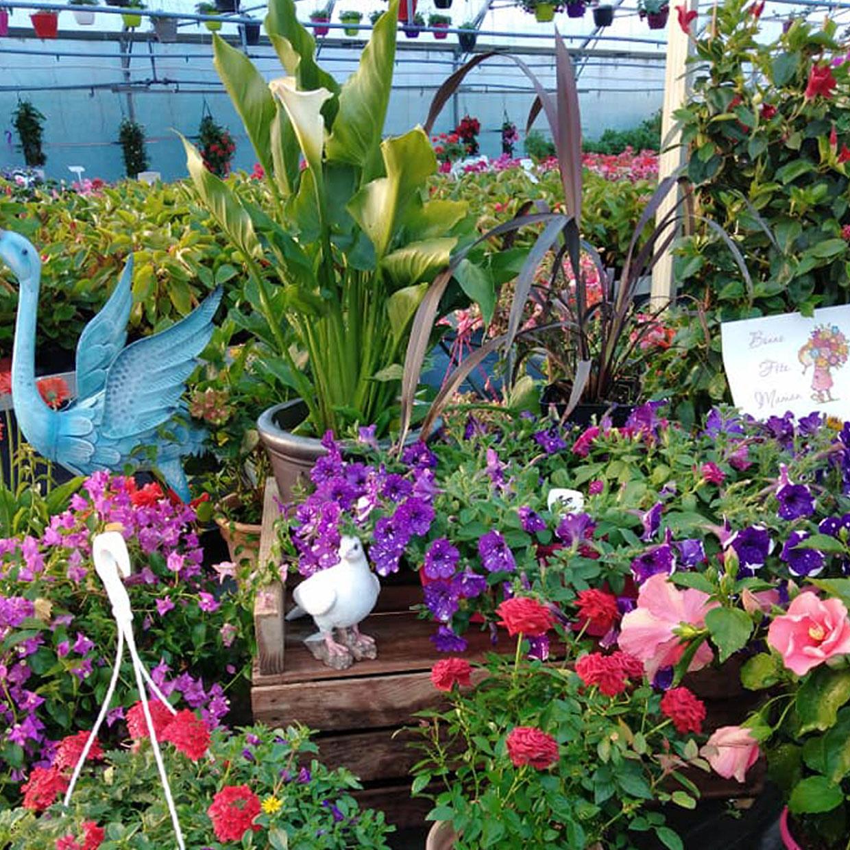 jardinerie-ortal-2