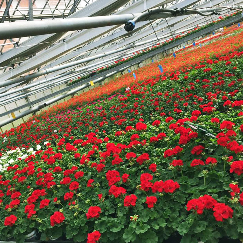 le-jardinier-photo-3