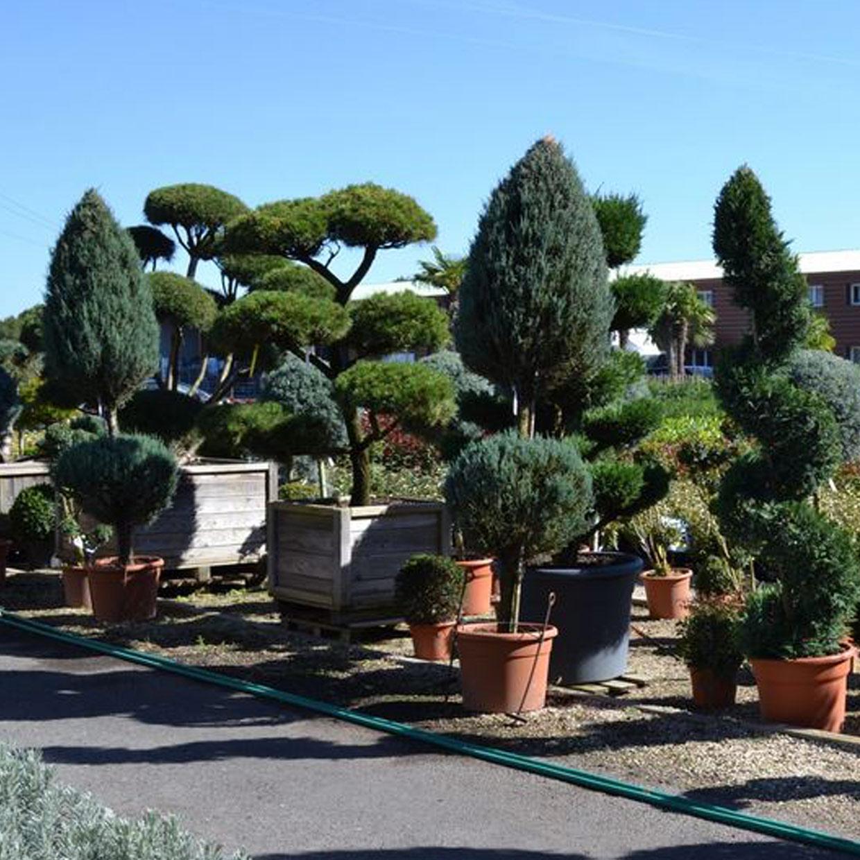jardin-de-sologne-2