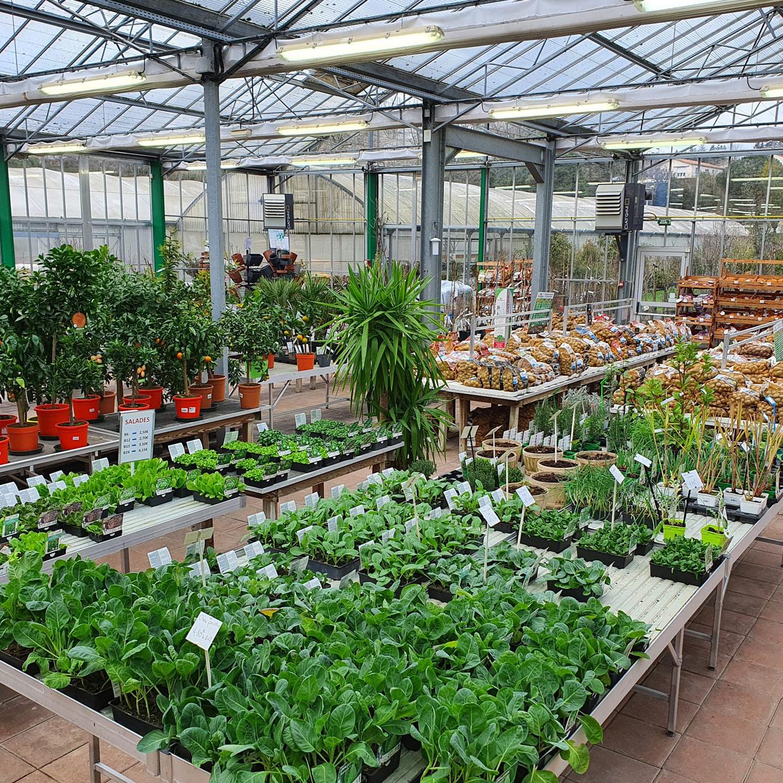 jardinerie-de-letoile-1