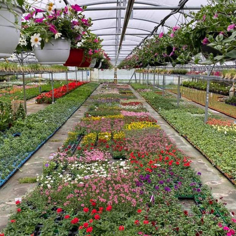jardinerie-glomot-6