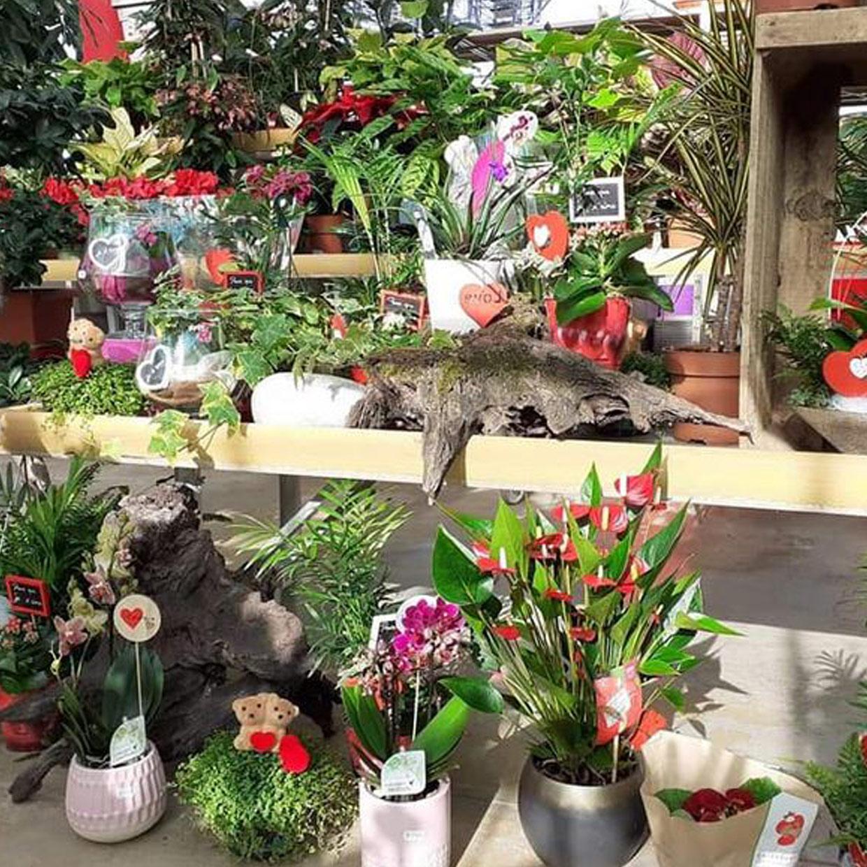 jardin-hommeraie-photo3