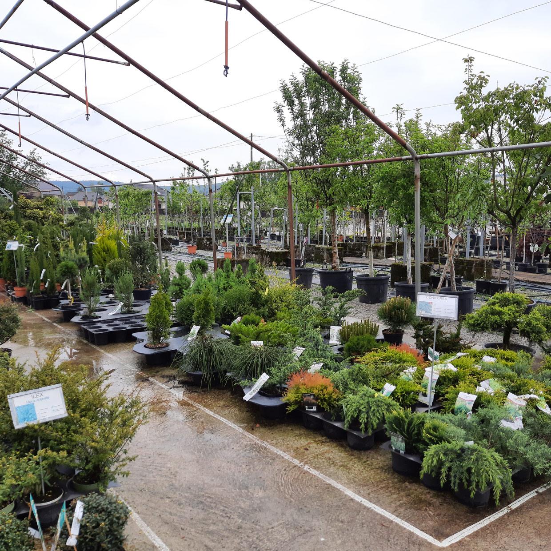jardinerie-boncap-bordere-1