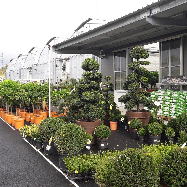 jardinerie-boncap-orthez-3