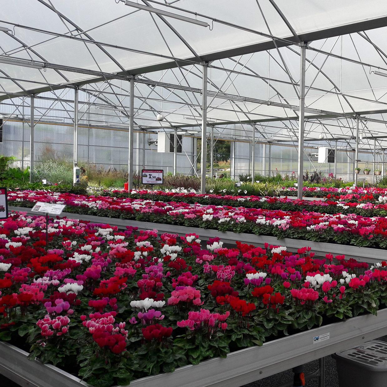 jardinerie-boncap-orthez-5