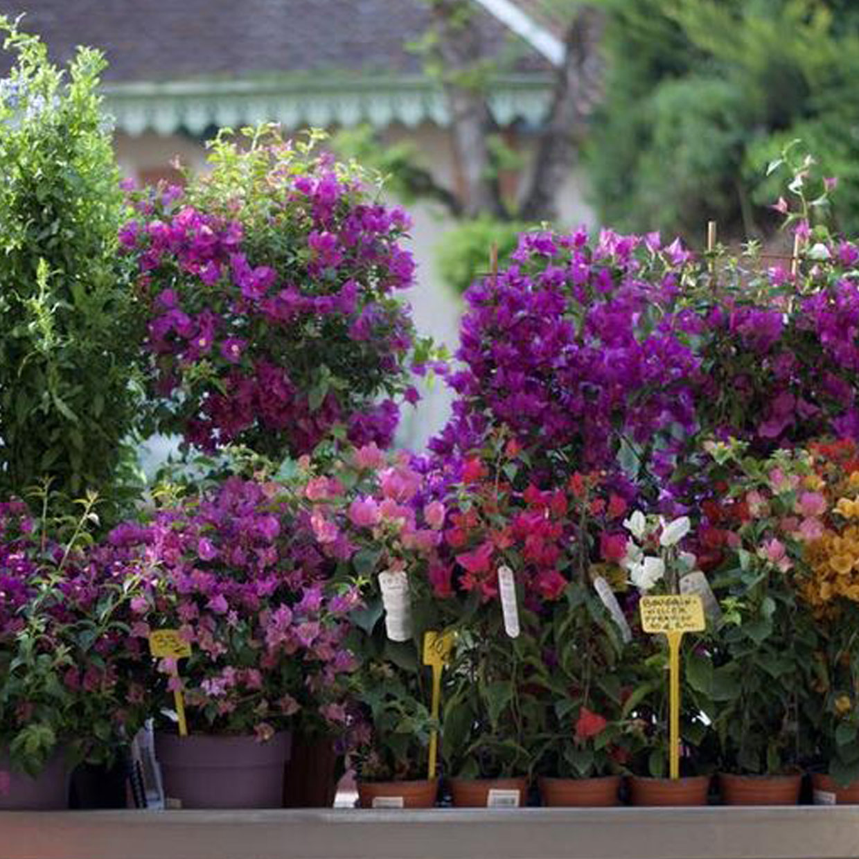 jardinerie-dupin-1