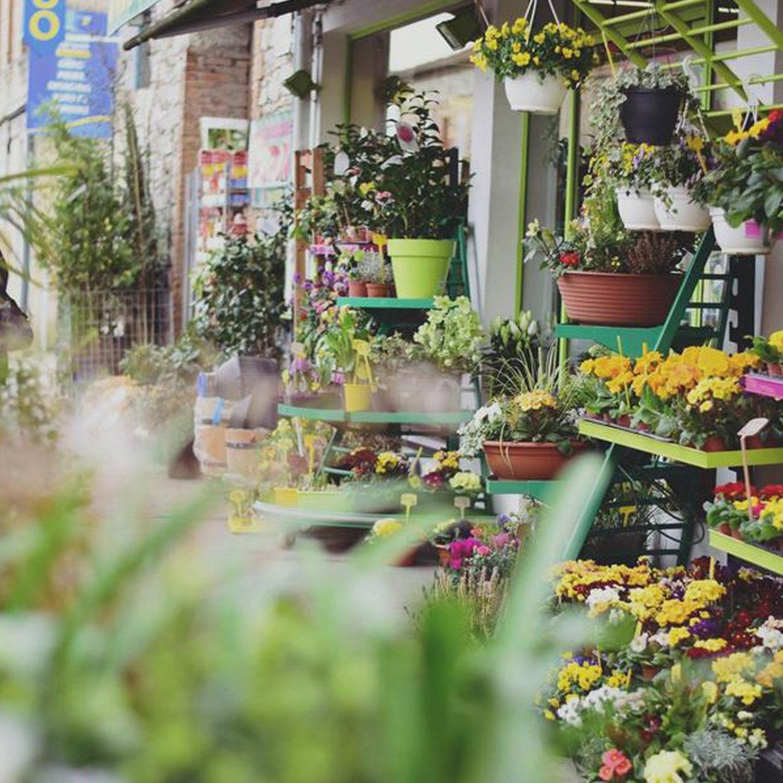 jardinerie-dupin-2