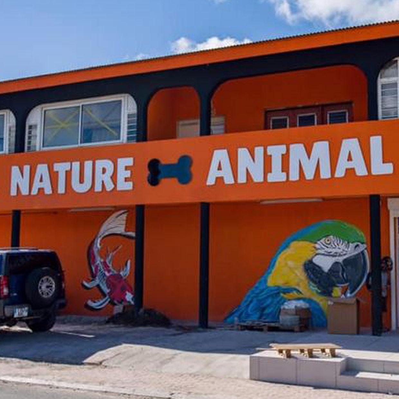 nature-animal-1