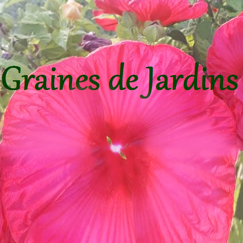 graines-de-jardin-7