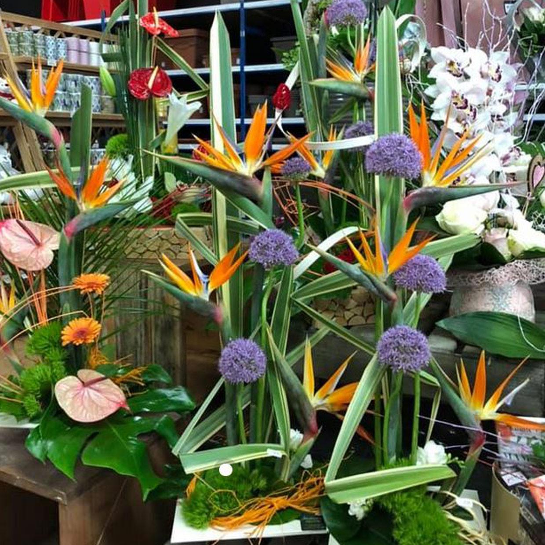 jardinerie-floravie-1