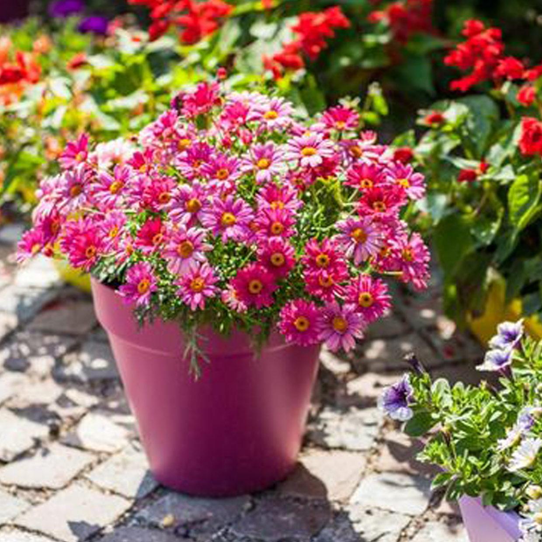 jardinerie-floravie-4