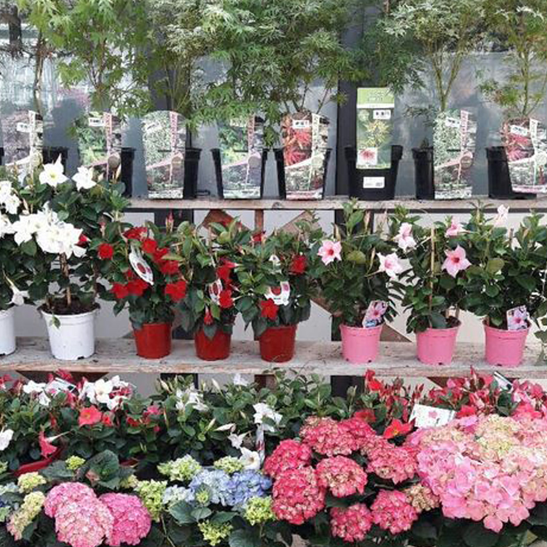 masson-fleurs-p1