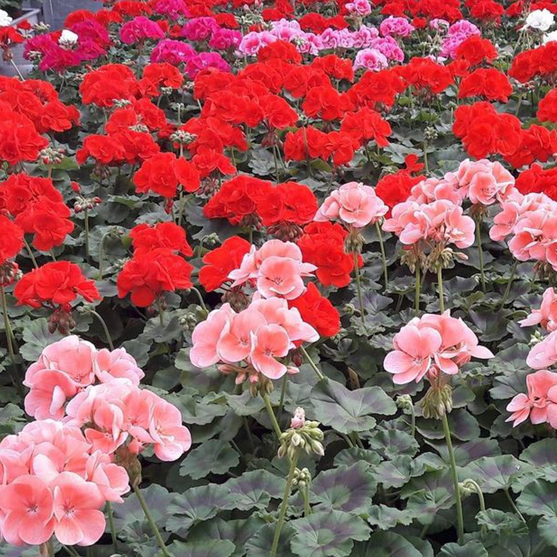 masson-fleurs-p3