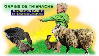 grains-de-thierche-logo2